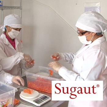 Mujeres en una empresa envasando gomitas, Sugaut para directorio Dancaru.com
