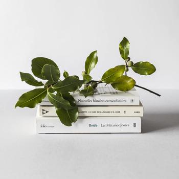 libros sobre un amesa, sobre ellos una planta verde, con un fondo blanco, educación